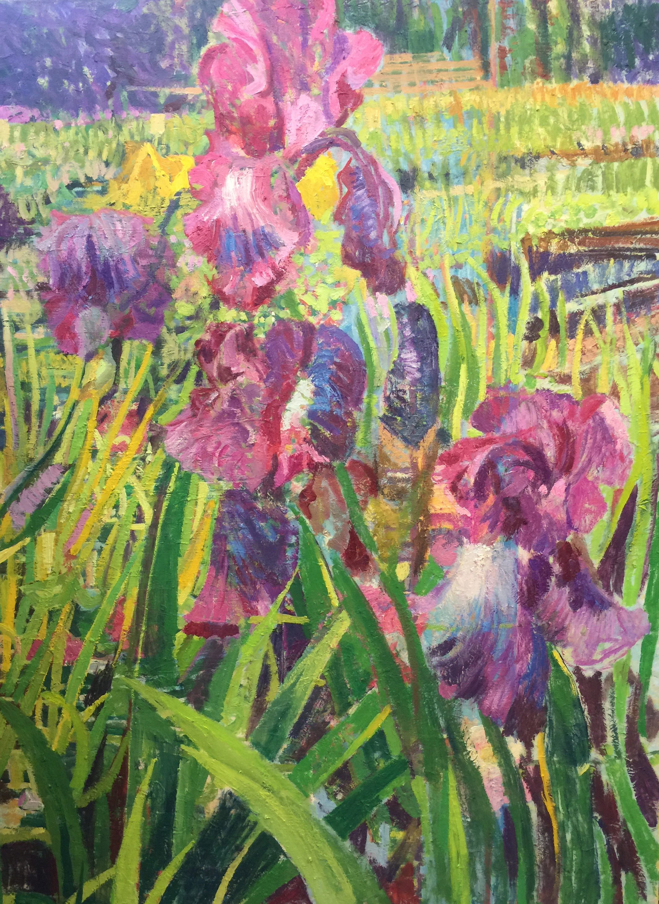Iris Garden  |  36 x 48   |  Oil on canvas